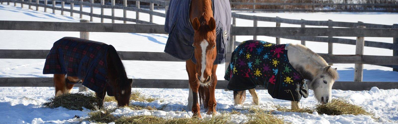 Mac & Ponies - Winter
