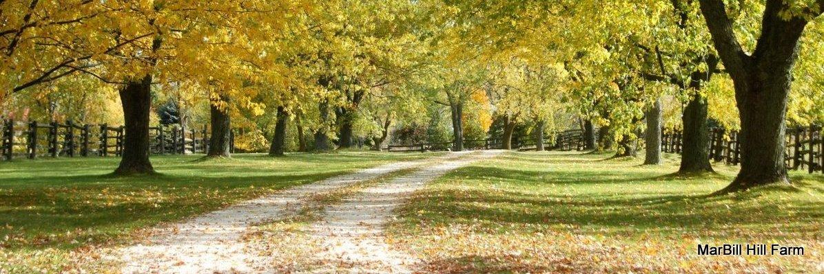 MarBill Hill Farm Drive - Fall