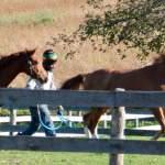 MarBill Hill Farm - Michael with horses