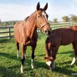 MarBill Hill Farm - Tosca and Carolos
