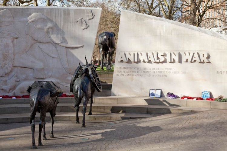 Animals in War Memorial celebrates 13th Anniversary | Marble Arch London