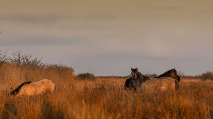 Am nächsten Morgen hat sich die Aufgabenverteilung wieder verändert. Zwei Pferde halten bei Sonnenaufgang Wache und haben damit das Komando.