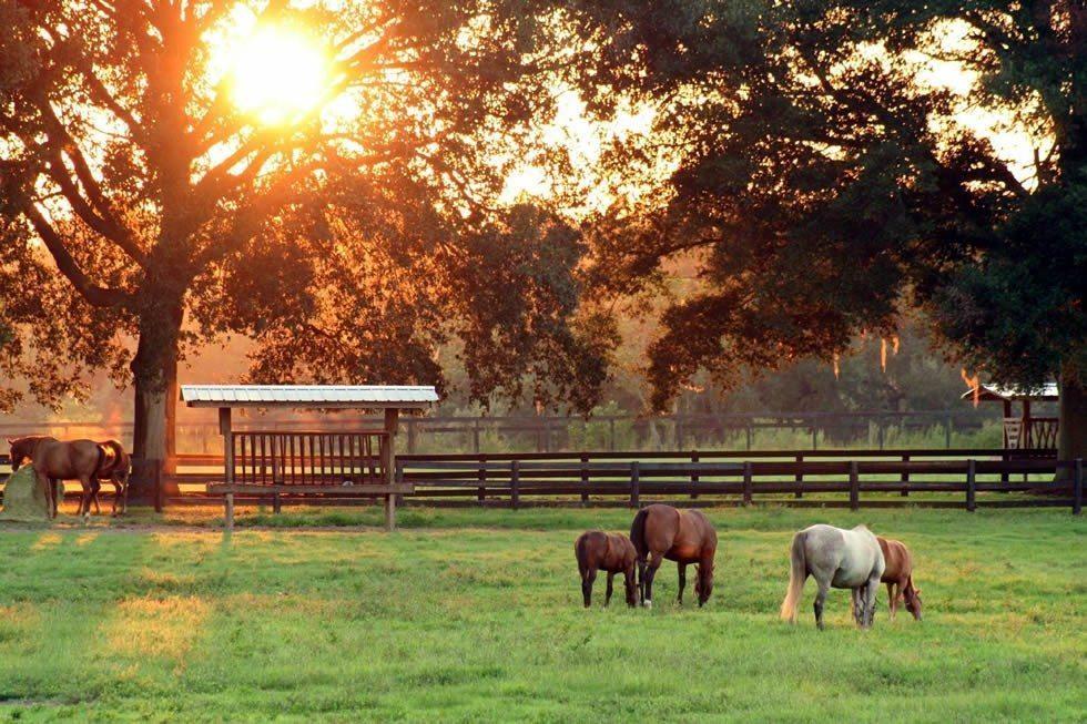 ocala_horse_country-cbe269fa76