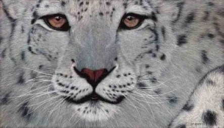 Endangered snow leopard with an estimated population of 4080 to 6590. Snow leopards are found in 12 countries—including China, Bhutan, Nepal, India, Pakistan, Afghanistan, Russia, and Mongolia. The powerful build allows it to scale great steep slopes with ease. Its hind legs give the snow leopard the ability to leap six times the length of its body while a long tail provides balance and agility and also wraps around the resting snow leopard as protection from the cold. The sole predator of snow leopard is humans. Hunting, habitat loss and retaliatory killings are the main reasons this big cat is now listed as an endangered species. This is an oil painting of the endangered Snow Leopard. Painted on a 12 Oz cotton duct canvas and stretched on a combination stretcher measuring 80cm in hight and 140cm in length and 5cm deep.