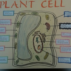 Plant Cell Diagram Project Ideas 2008 Ford F250 Tow Mirror Wiring Teaching Artifacts Marc Berger 39s Portfolio