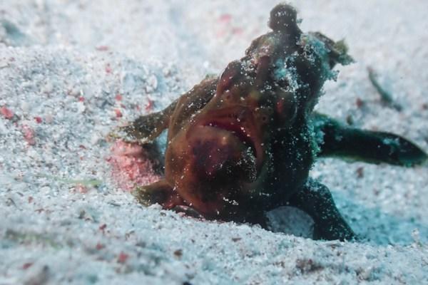 Un réel bain de sable