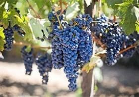 Vind de perfecte wijn