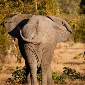 backside (south africa)