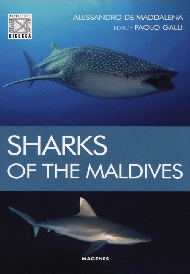 Sharks of The Maldives