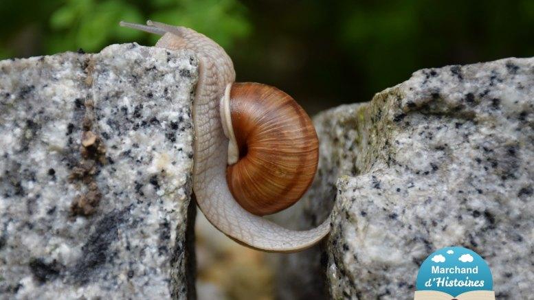 un escargot symbolise une énigme facile