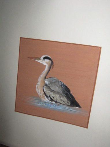 La Grue cendrée :observation d'après photos sur les Oiseaux du Bassin d'Arcachon