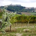 vini cantina Ortenzi