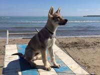 Al mare con il cane, spiagge e strutture accessibili