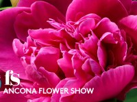 Ancona Flower Show, mostra mercato di piante rare e inconsuete.