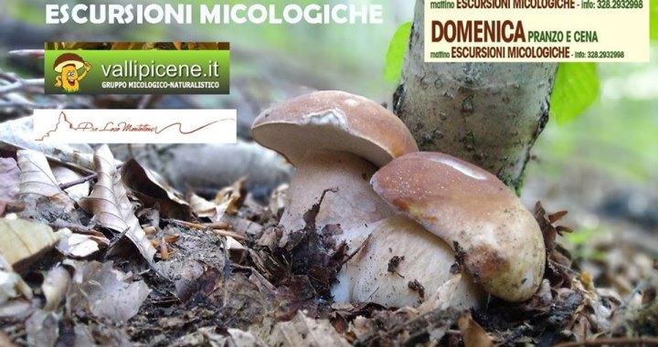 escursioni micologiche