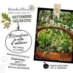 Erbe d'autunno – passeggiata di riconoscimento delle piante spontanee