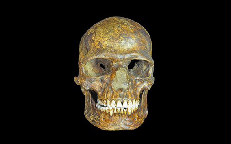 Groundbreaking Study of Ancient DNA Reveals Genetic Commonality to Modern Europeans
