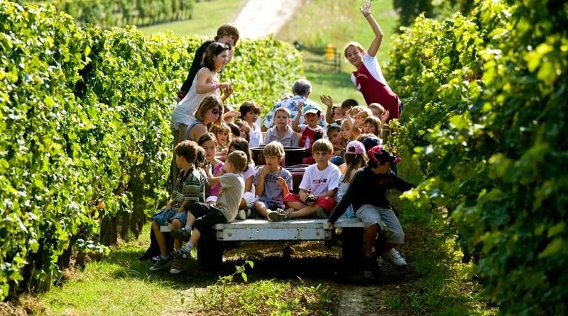 Bordeaux Wine Bureau (CIVB)