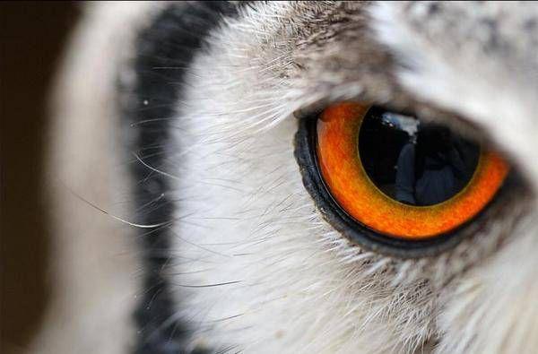 40 Macrofotografas de ojos animales  Marcianos