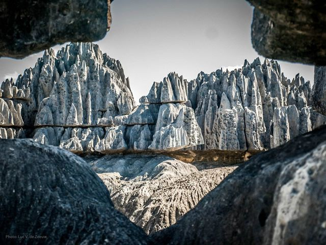 bosque rocas