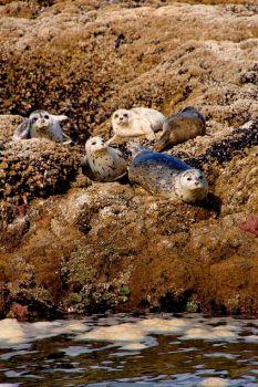 seals-on-shell-island