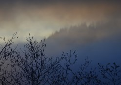Evening fog rolls in past Flores Mountain with alder trees in front