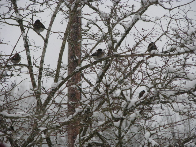 birds-in-our-trees