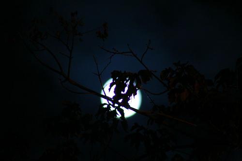 Ma tutto è eclissato dalla Luna di Enea Francia