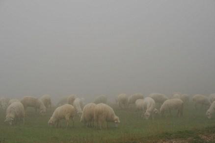 """""""Branco di pecore nella nebbia"""" di Enea Francia"""