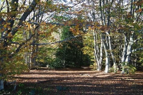 Il Foliage di Canfaito. Il sottobosco magnifico.