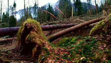 Alberi stroncati dal vento in Val di Sella (TN), ci sono stato qualche tempo fa