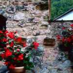 I fiori al centro di Serrapetrona