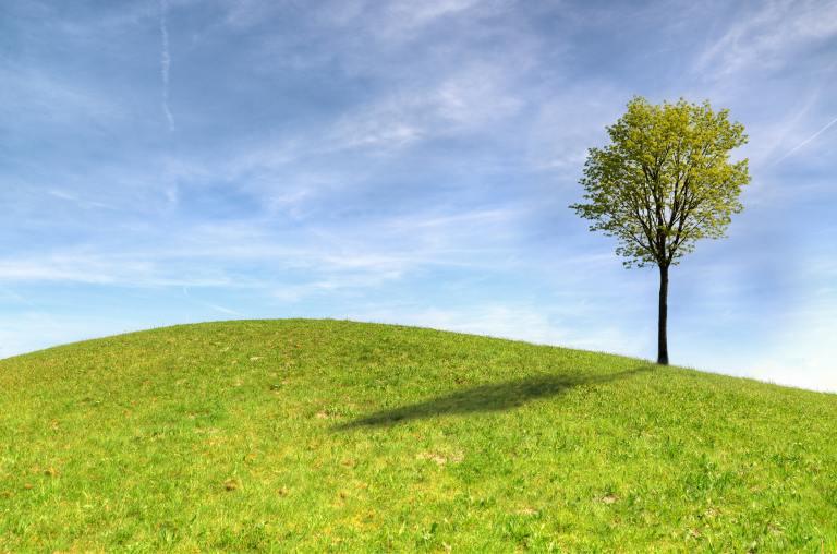 Immagine di un albero