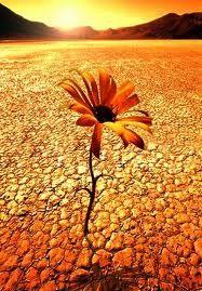 fiore-deserto