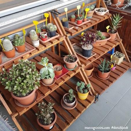 piante sul terrazzo piante grasse