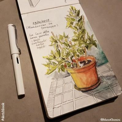 schizzi di piante sul terrazzo , disegnare dal vero