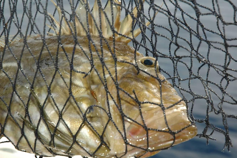 un capiente guadino è sempre utile per alzare il pesce dall'acqua