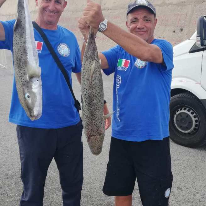 I pesci palla vengono ritirati a fine gara dalle Autorità e smaltiti seocndo la legge