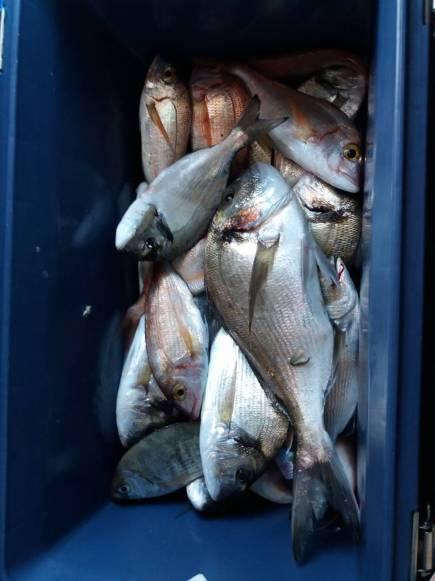 Pesca mista in prevalenza orate ma anche dei grossi pagelli