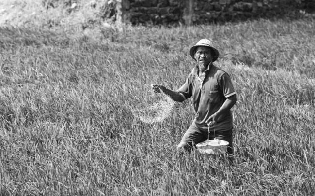 Abschied aus Bali Reisbauer Bali Marco Schur Bali Fotografie Rice field