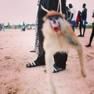 Monkey | Macaco