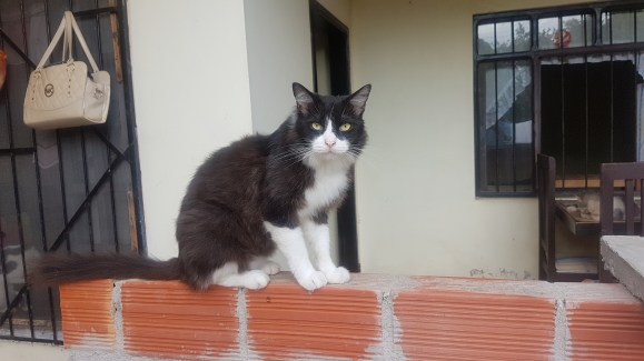 Historias de vida - Refugio gatos