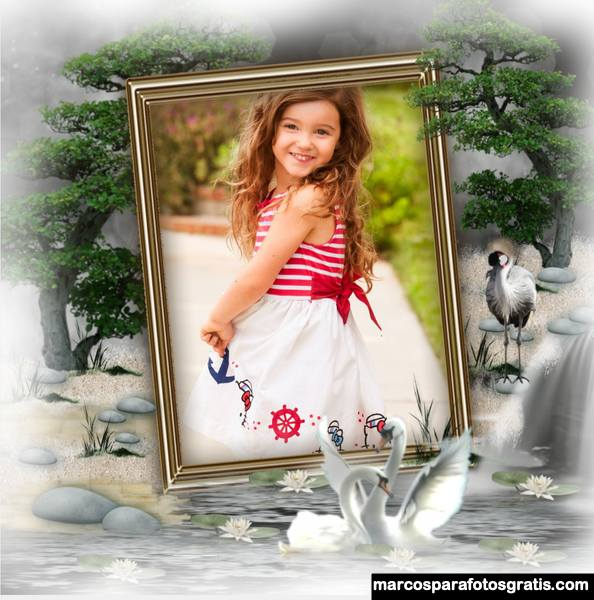 Marcos de fotos con cisnes y aves