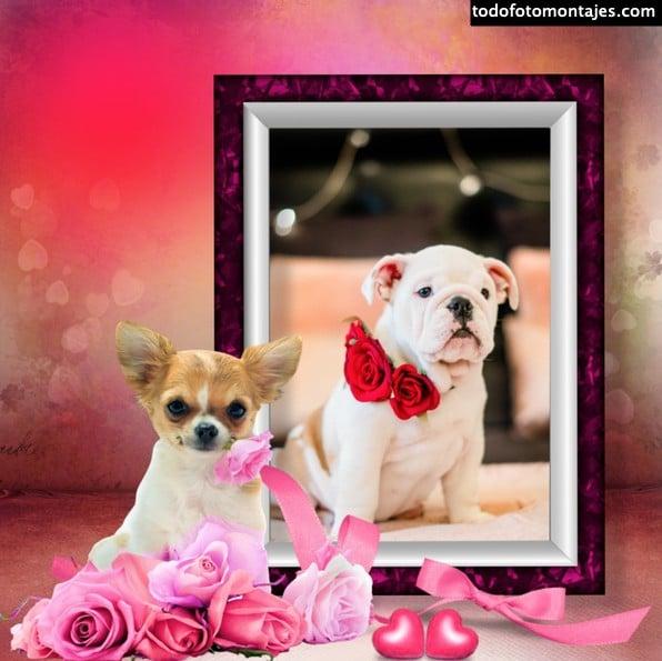 Fotomontaje de perritos y cachorros