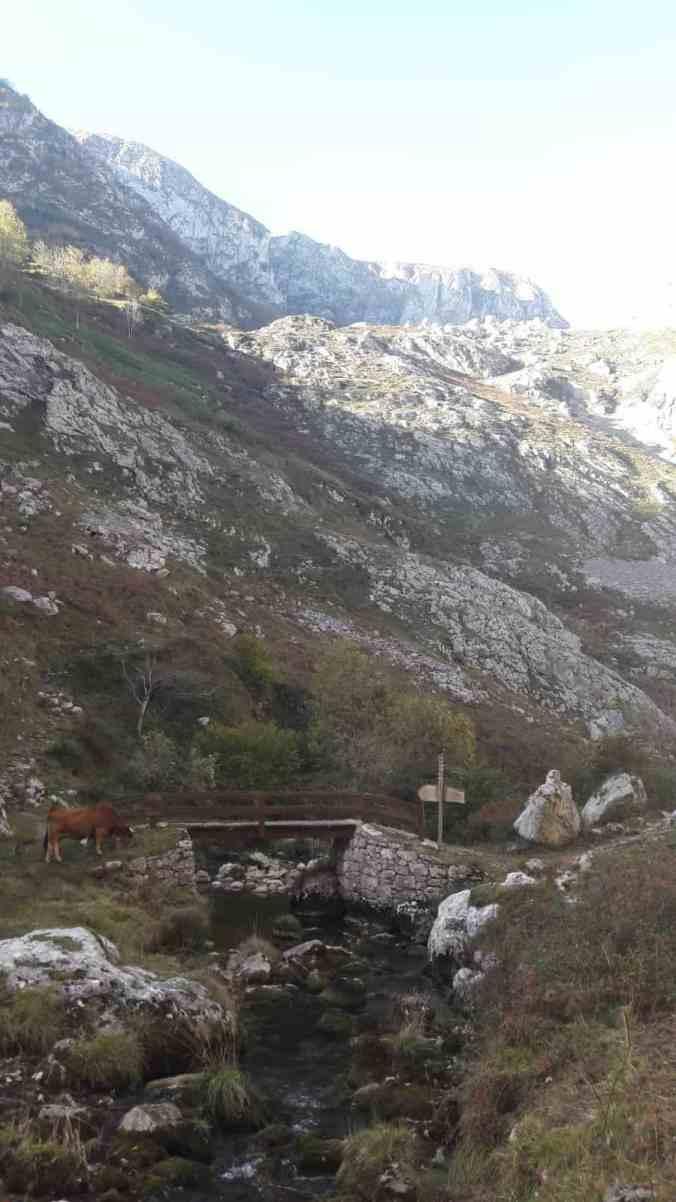 Ruta de Poncebos a Bulnes por el canal del Texu