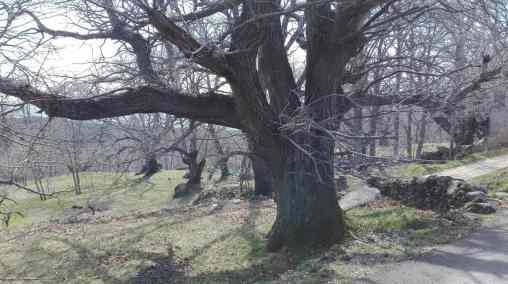 Bosques mágicos Sierra de Gredos