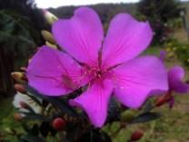 Grilo e a flor - Rio Preto - MG - 2016