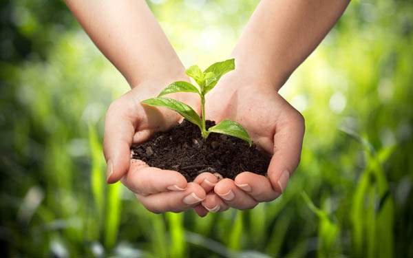Sprouting plant in hands