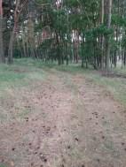 Waldweg bei Mötzow