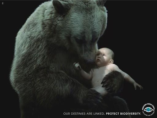 Oso con bebé